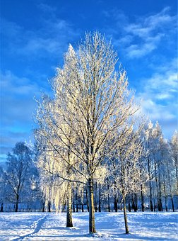 Winter, Snow, Tree, Rime, Winter Day, Nature, Cold