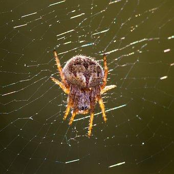 Spider, Small, Nature, Close, Small Spider, Arachnids