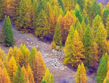 Autumn, Argentera Valley, Piemonte, Italy, Mountain