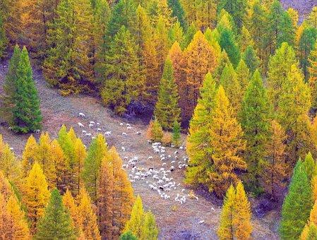 Autumn, Argentera Valley, Piemonte, Italy, Mountain
