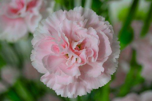 Bouquet, Pink, Flower, Nature, Blossom, Spring, Floral