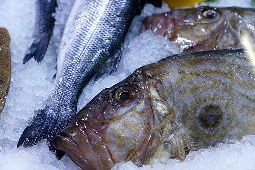 Fish, Dori, Dorado, Delicious, Water, Aquarium, Food
