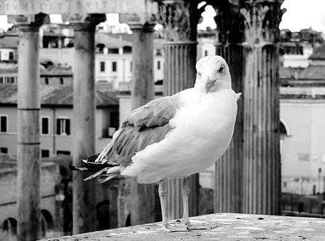 Rome, Lazio, Italy, City, Downtown, Big City