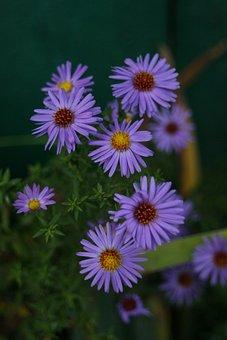 Flowers, Flower Bed, Summer, Summer Flowers, Garden