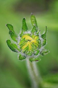 Macro, Dew, Rain, Flower Bud, Flower, Yellow, Bud