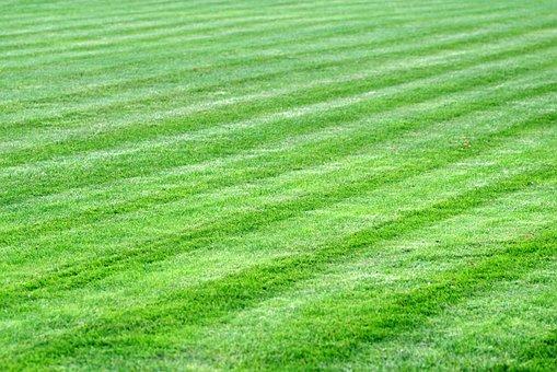 Grass, Meadow, Lawn, Green, Skoszone, The Pitch, Garden