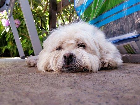 Dog, Cute, Sleeping, Floor, Laying, Pet, Puppy, Animal