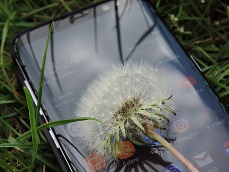 Nature, Technology, Mobile Phone, Mirroring, Smartphone