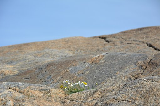 Daisy, Mountain, Himmel, Background, Nature, Flowers