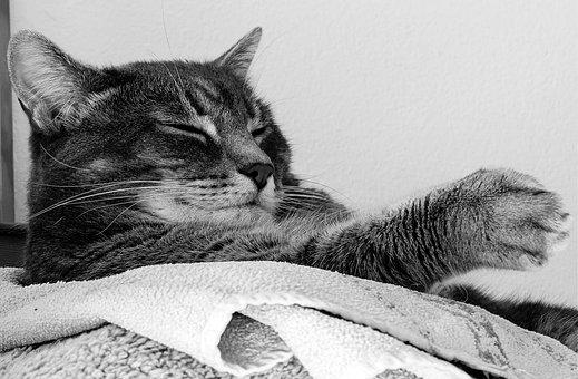 Cat, Cats, Animal, Animals, Pet, Pets, Feline, Felines