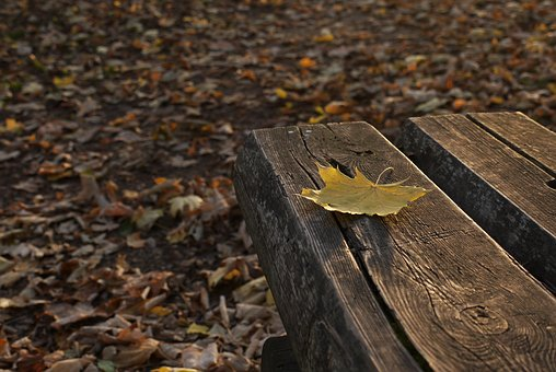 Autumn, Seat, Nature, Relax, Forest, Wooden, Season