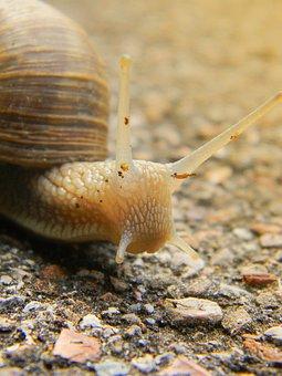 Snail, Shell, Snail Shells, Nature, Snail Shell, Spiral