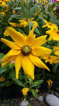 Yellow Flower, Flora, Yellow, Spring, Flower, Nature