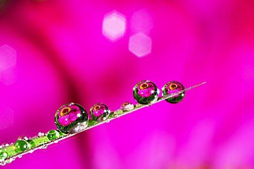 Morning Dew, Reflect, Tabitha, Autumn, Purple, Flowers