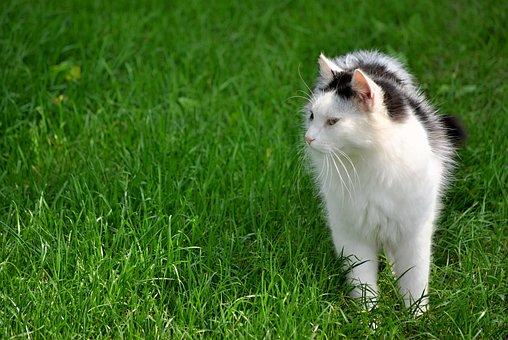 Tomcat, Summer, Hair, Black And White Cat, Domestic Cat