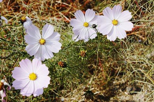 Flowers, White, White Flower, Spring, Nature
