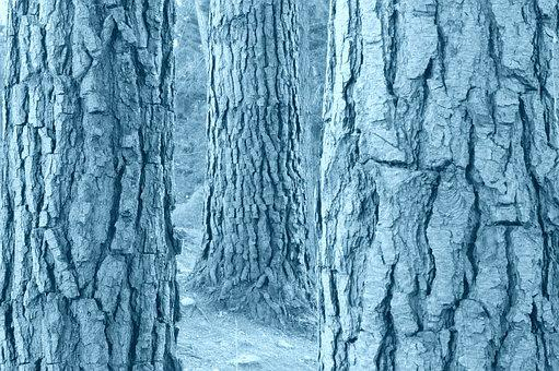 Tree, Trunks, Black And White, Nature, Wood, Bark