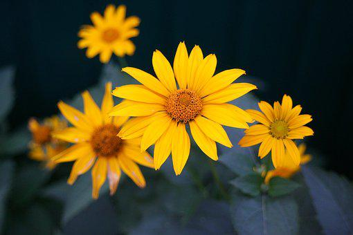 Yellow, Flower, In The Summer Of, A Yellow Flower