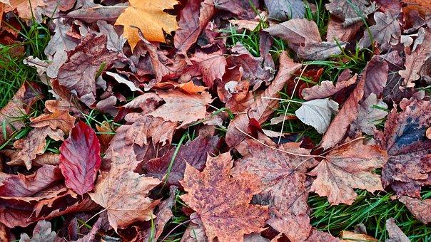 Autumn, Leaves, Fall, Nature, Leaf, Yellow, Season