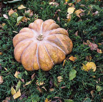 Autumn, Fall, Still-life, Still Life, Pumpkin