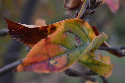 Leaf, Color, Plants, Autumn, Colors, Yellow, Brown