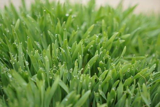Dew, Full Mouth, Nature, Landscape, Plants