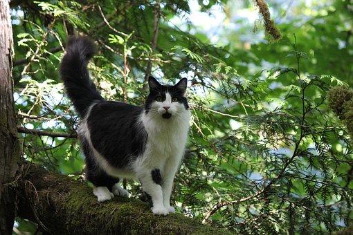 Cat, Outside, Tree, Cute, Pet, Animal, Feline, Domestic