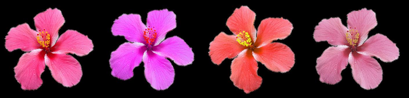 Blossom, Bloom, Flower, Colorful, Plant, Color