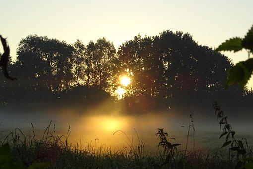 Autumn, Fog, Mood, Landscape, Golden Autumn, Trees