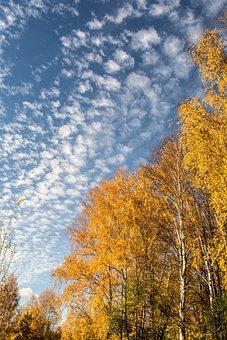 Autumn, Nature, Autumn Nature, Golden Autumn