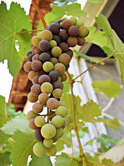 Grapes, The Sweetness, Fruit