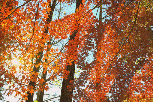 Sunbeams, Autumn, Japan, Forest, Wood, Fall Of Japan