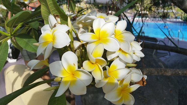 Blossom, Bloom, Nature, Plant, White Blossom