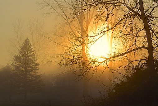 Sunrise, Fog, Tree, Sun, Sky, Sunlight, Silhouette