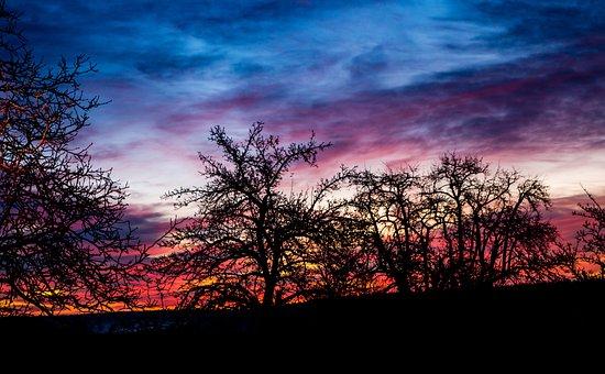 Sunrise, Trees, Back Light, Landscape, Nature