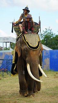 Elephant, Tusks, Warrior, Armed, Dressed, Fighting