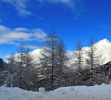 Winter, Snow, Wintry, White, Frozen, Mood