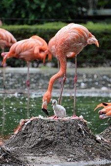 Flamingo, Animal, Pink Flamingo, Pink, Water Bird, Bird