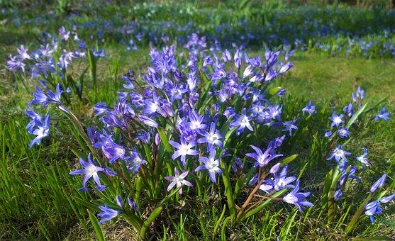 Flowers, Spring, Garden, Blomsterplantering