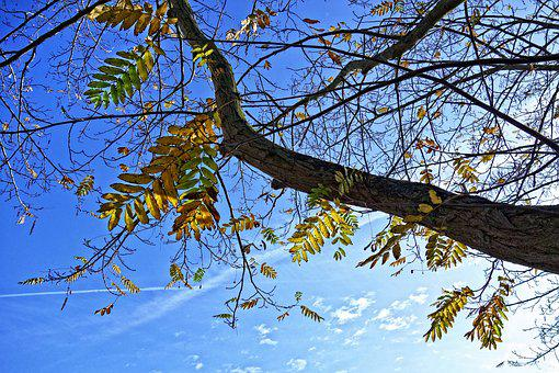 Tree, Branch, Leaves, Autumn Leaves, Foliage, Twigs