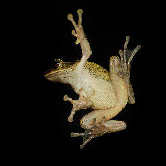 Creature, Froggy, Close-up, Insects