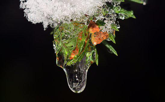 Drip, Frozen, Ice, Cold, Winter, Snow, Iced, Frosty