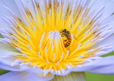 Bee, Flower, Nature, Spring, Honey, Garden, Yellow