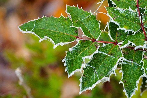 Green Plant, Nature, Frozen, Green, Plant, Leaf, Leaves