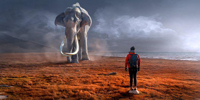 Fantasy, Landscape, Elephant, Man, Sun, Light