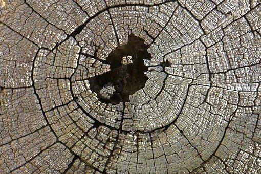 Texture, Log, Wood, Pattern, Timber, Nature, Brown, Cut