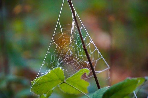 Cobweb, Dew, Autumn, Nature, Network, Morgentau, Moist