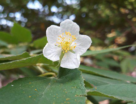 Flower, Nature, Plant, Natural, Spring, Summer