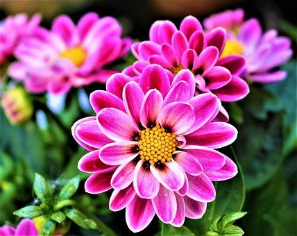 Flowers, Petal, Flowering, Plants, Garden, Summer