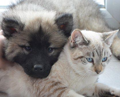 Dog Cat, Puppy Kitten, Complicity, Domestic Animal